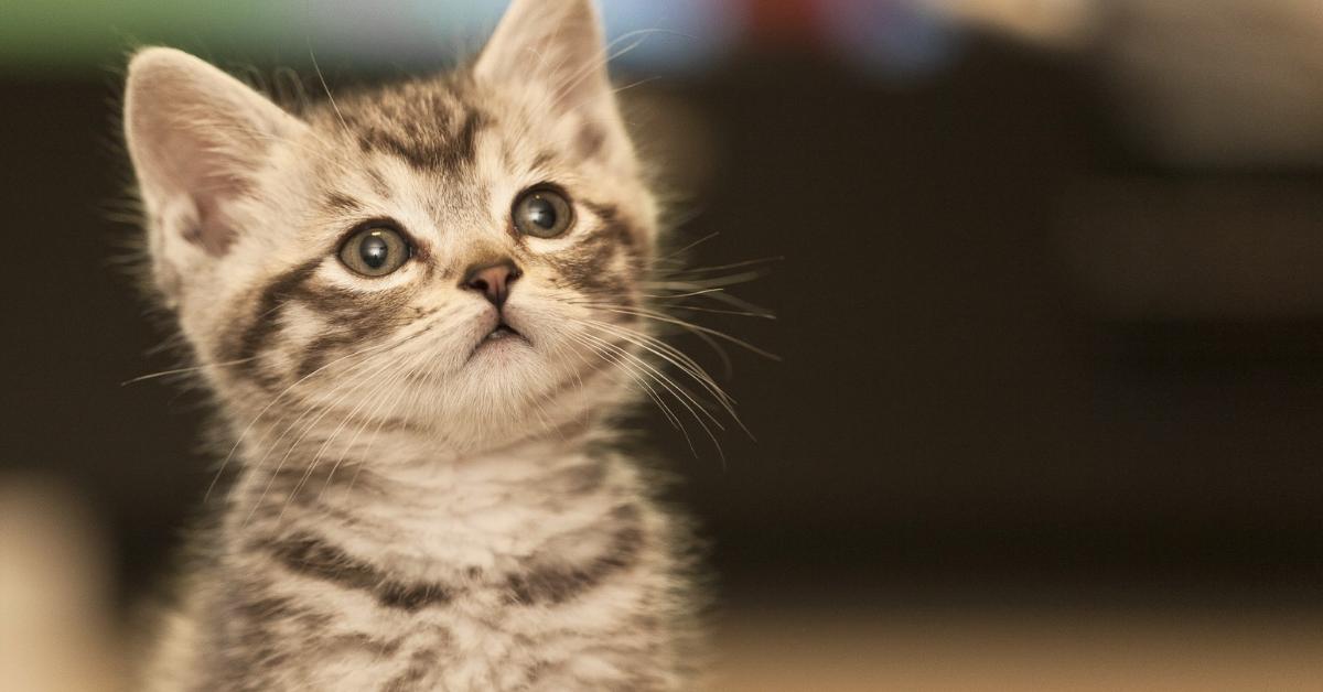 A macskatartás ábécéje
