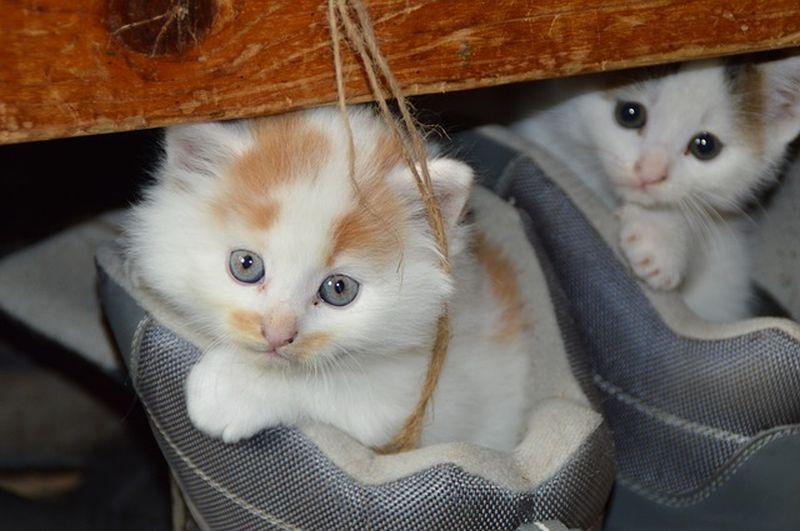9 mágikus titok a macskákról (Cuki cicafotókkal!)