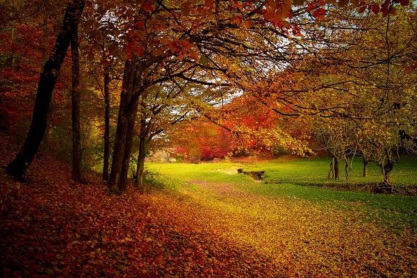 Lombhullásig - éld át az őszi hangulatot!