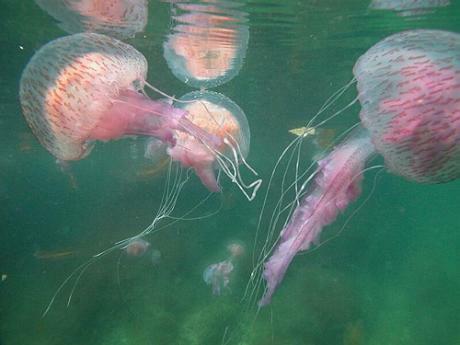 A melegedő tenger miatt vándorolnak az állatok