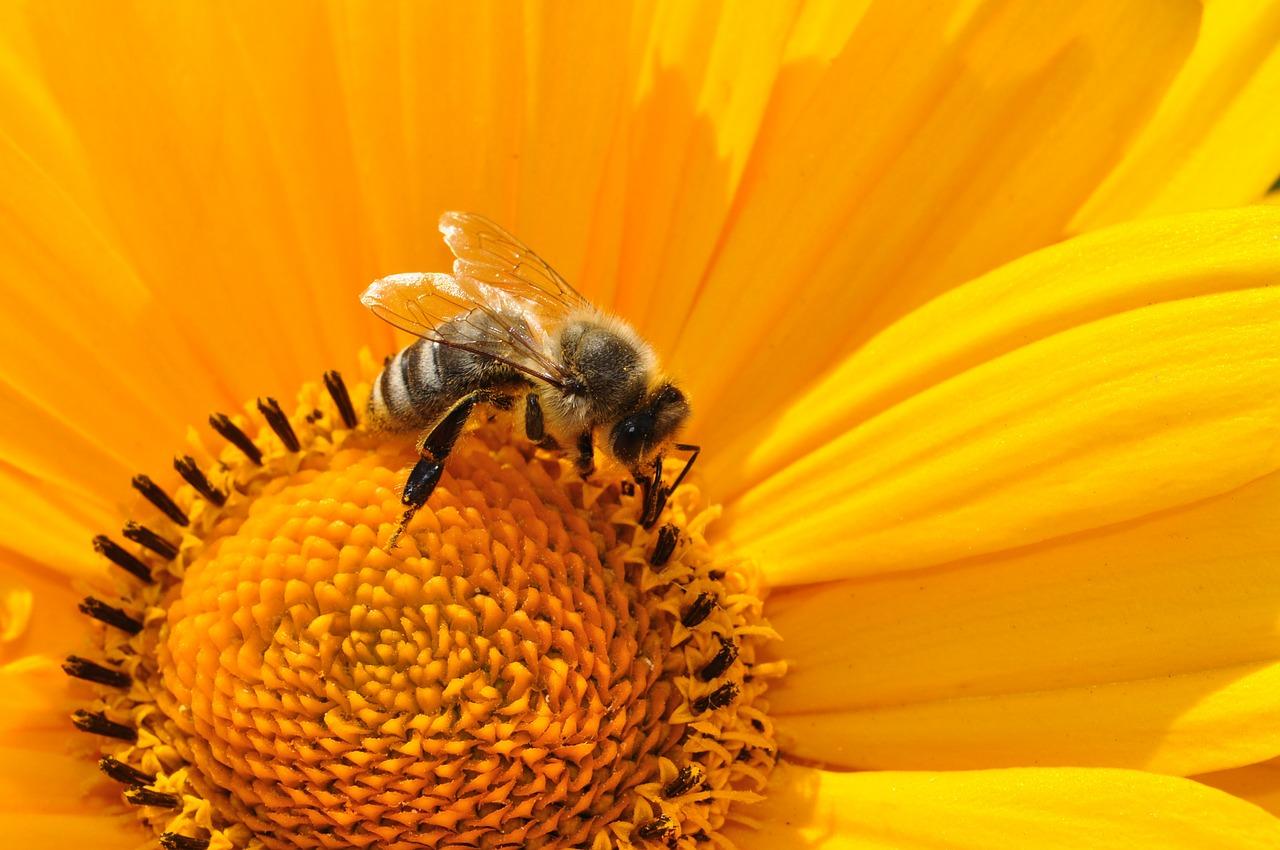 A darázs- és méhcsípés és veszélyes velejárói