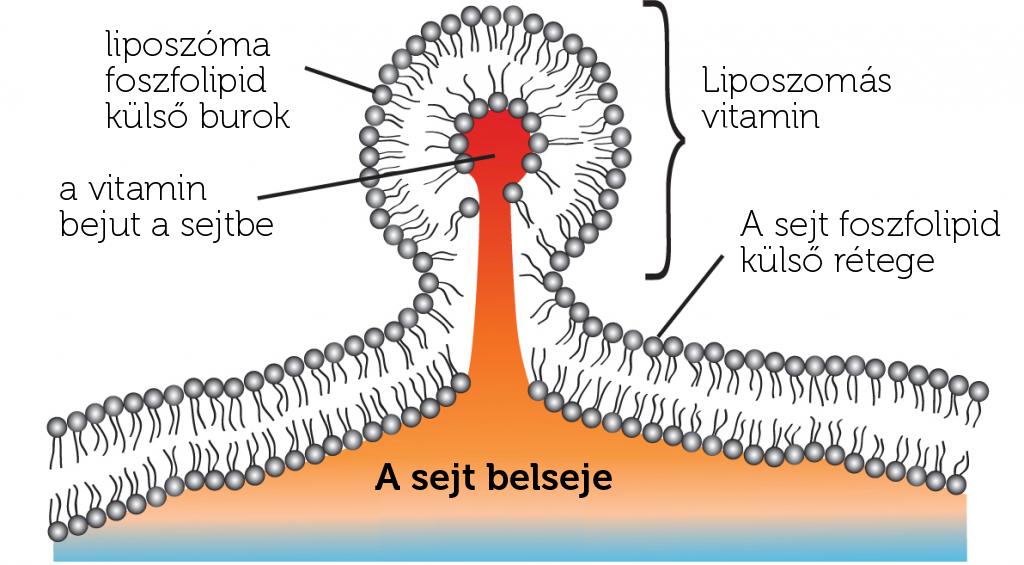liposzima
