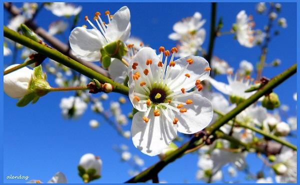 Hogyan hat Rád a tavasz? 5 tipp a tavaszi megújulás jegyében