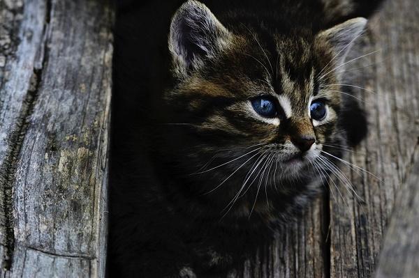 Nyílt levél azoknak, akik fagyállót tesznek ki macska ellen