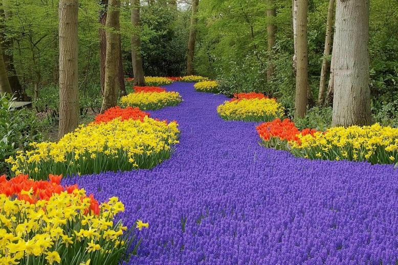 Amszterdam - ahol buliba torkollik a kerekes tulipánvadászat!