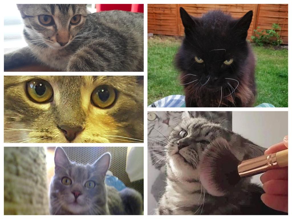 MIAU! Bemutatjuk a magyar Facebook legmenőbb macskáit 1.