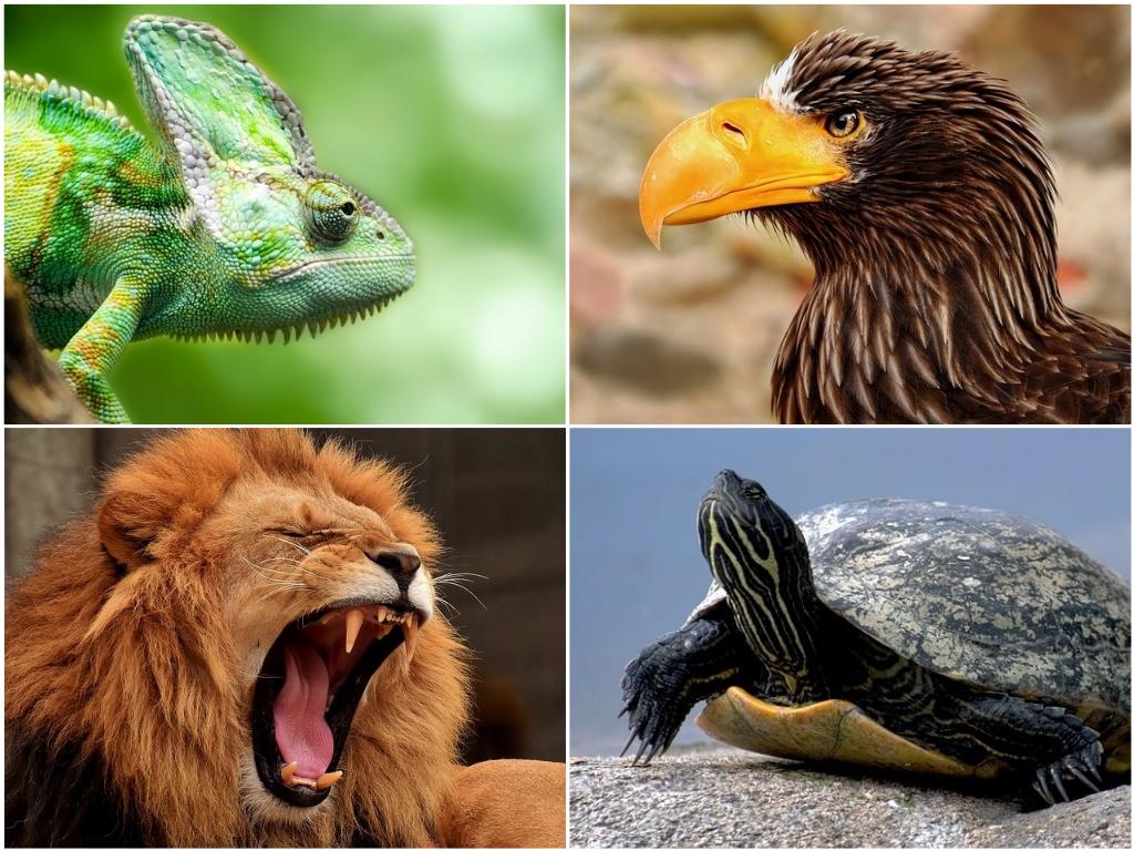 Te egy állat vagy! Azt is megmondom, melyik!