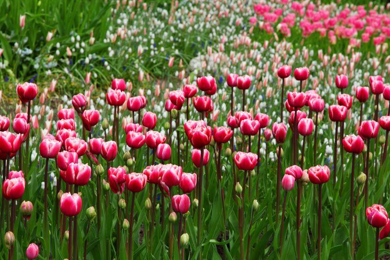 A virágok titkai - Mit jelképeznek?