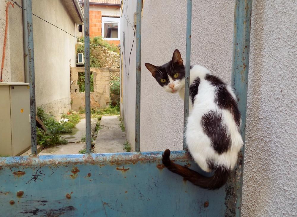 A 10 legrosszabb kifogás macskák (és kutyák) ivartalanítása ellen