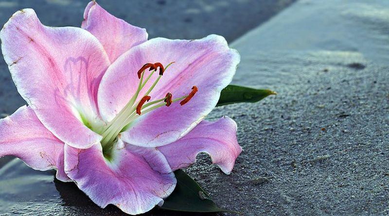 Melyik a kedvenc virágod? Tavaszi partner-jósda!
