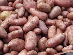 Szezámmagos-fetás újkrumpli görög, paradicsomos, óriás fehérbabbal, olajbogyóval