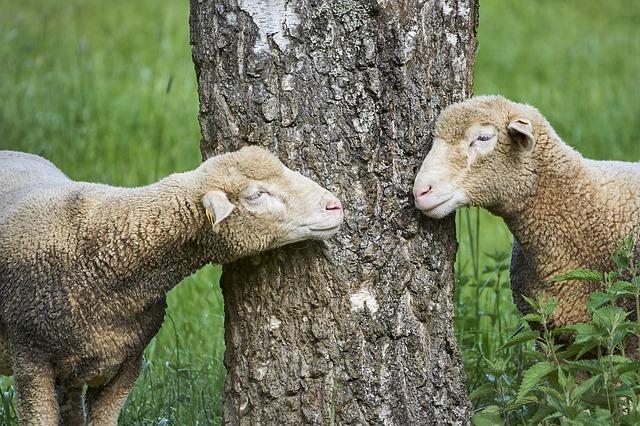 Eredményes párbeszéd a párkapcsolatban
