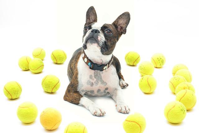 Reagáló kutyák vagyunk?