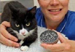 A Terminátor cica mindent túlél