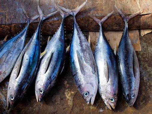 Sajtos-gombás tonhalszeletek