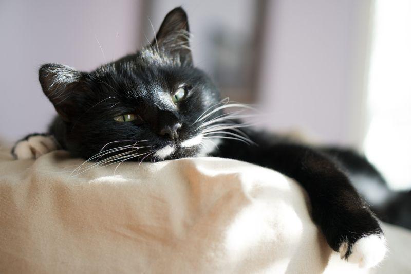 Segíts cicádnak szembeszállni a hőséggel!