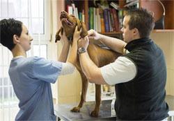Január elsejétől büntethetők a mikrochippel nem rendelkező kutyák gazdái