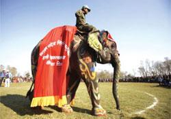 Elefánt-szépségversenyt rendeztek Nepálban