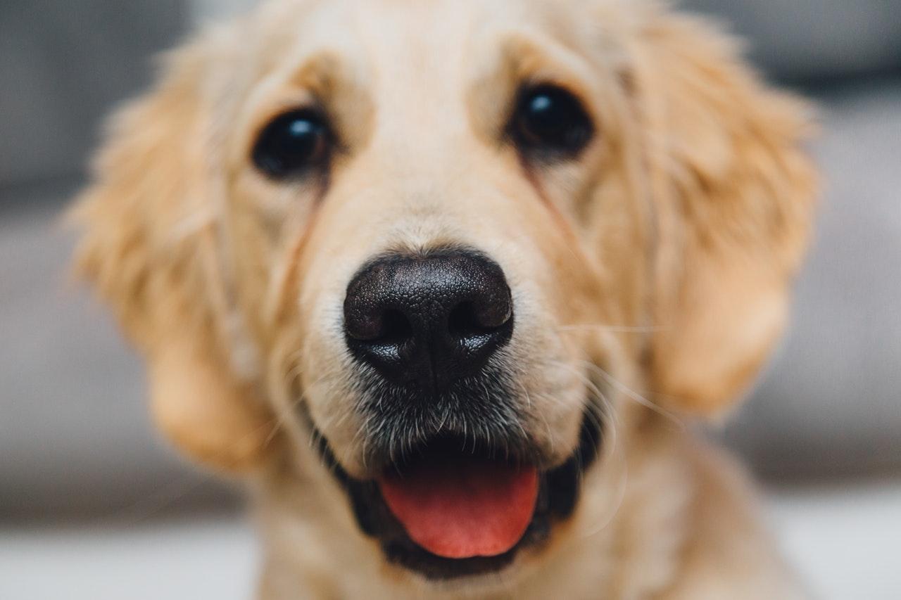 Miért nem eszünk kutyát?
