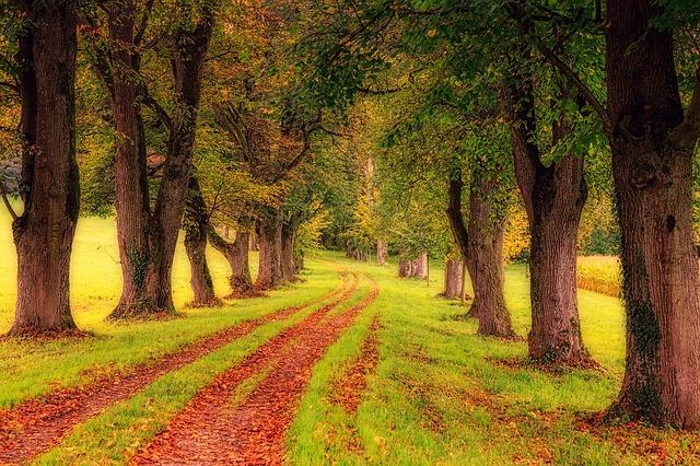 Hogyan tudjuk a szervezetünket erősíteni az őszi időszakban?