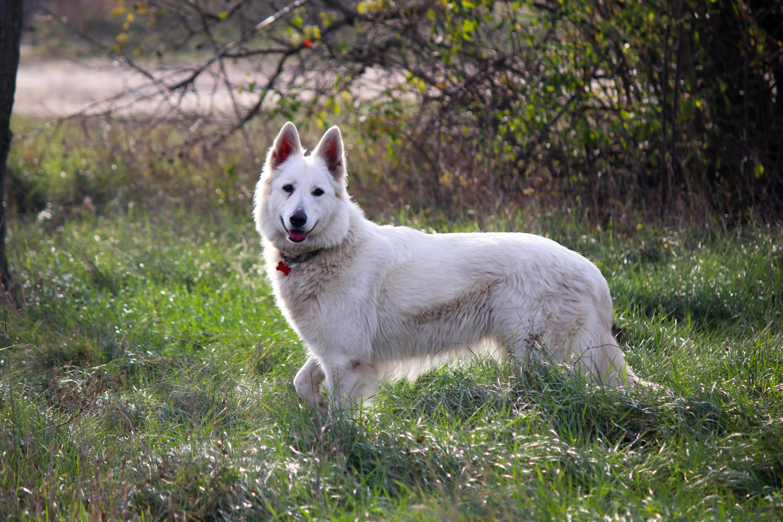 Mutasd a kutyádat, megmondjuk, hogy bírja a hideget!