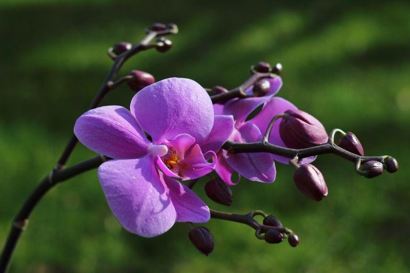 9 növény, ami pozitív légkört teremt az otthonodban
