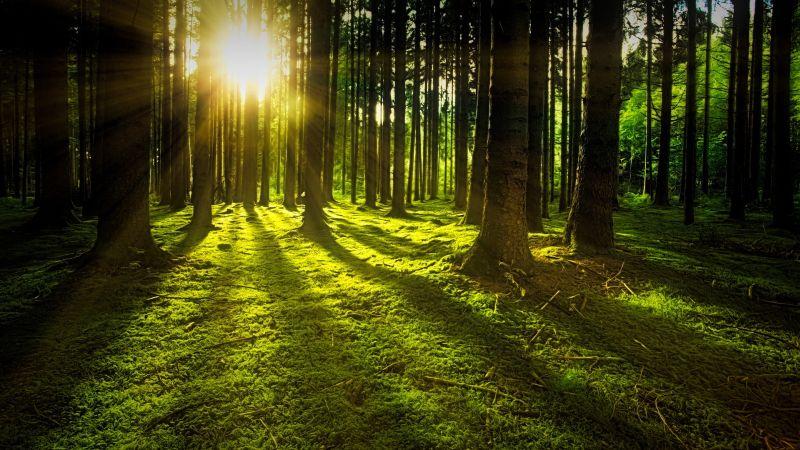Hogyan gyógyít a természet?