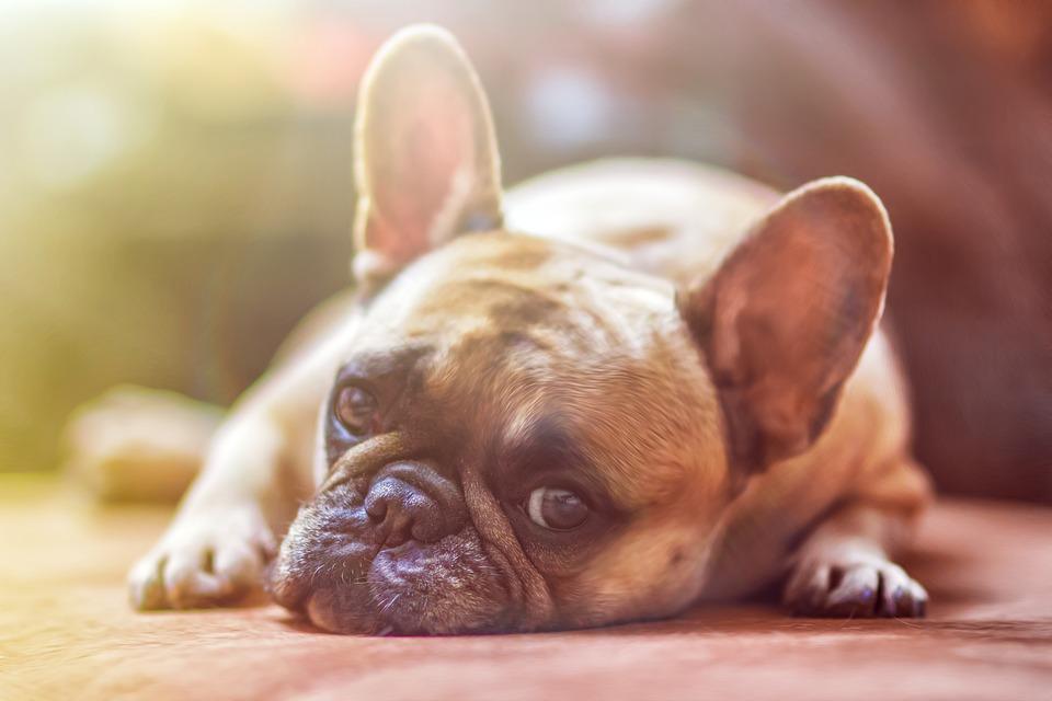 2018 a Kutya éve! Részletes elemzés mind a 12 jegy szülöttjének
