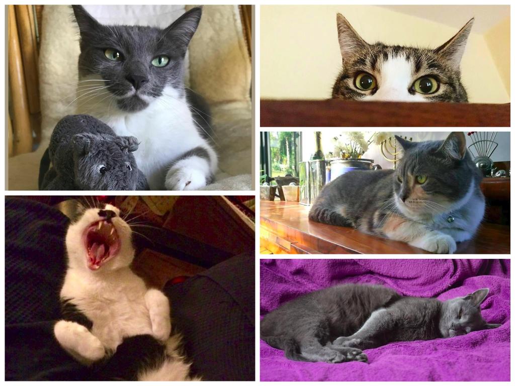 MIAU! Bemutatjuk a magyar Facebook legmenőbb macskáit 2.