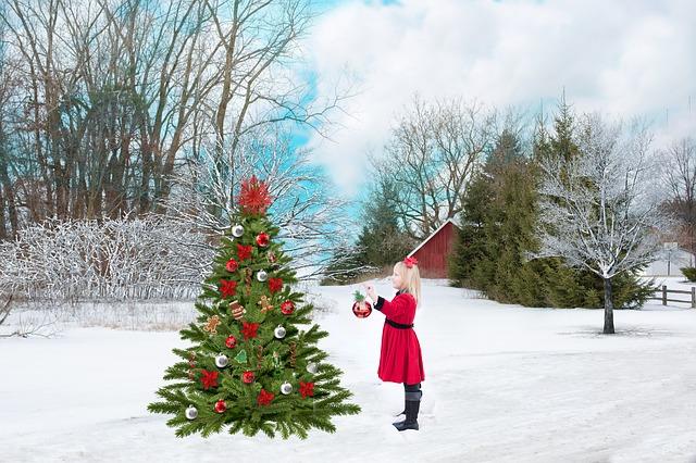 Igazi vagy műfenyő? A karácsonyfák élete