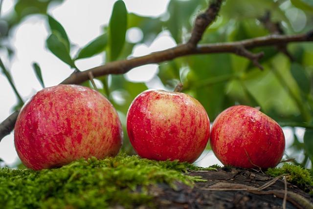 Kocsonyázott alma Rézi néni szakácskönyvéből
