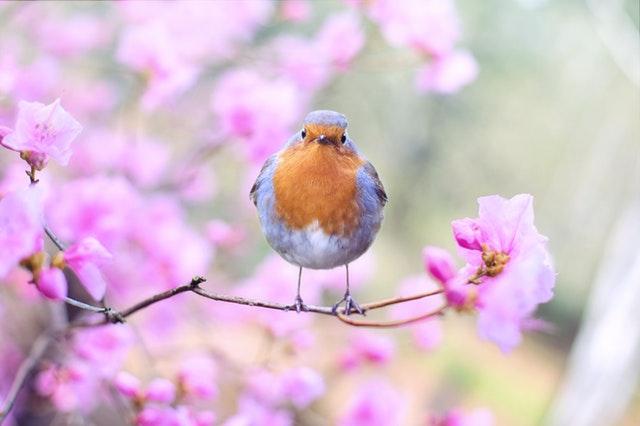 A tavaszi zsongásban ne feledkezzünk meg az egészségünkről sem!
