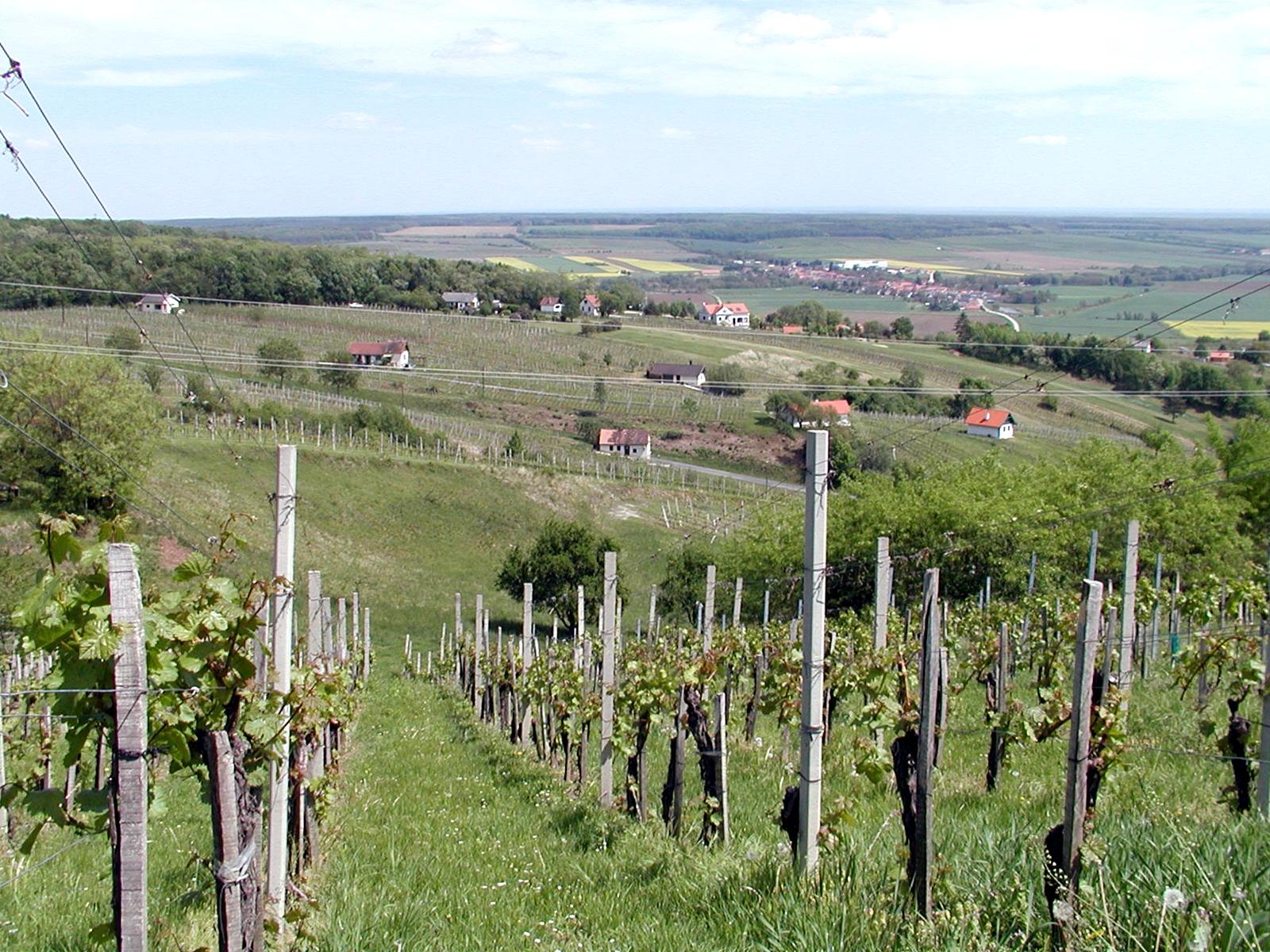 Szomszédolás: Bortavasz Dél-Burgenlandban, a határ mentén