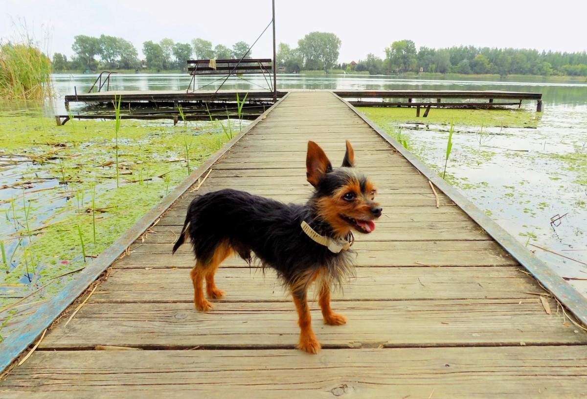 A felelős kutyatartás 10+1 pontja