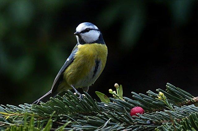 Mozduljunk ki! - évbúcsúztató madárgyűrűzés a fővárosi Farkas-erdőben