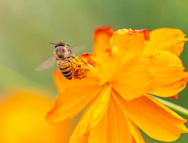 Szállást keresnek a magányos méhek