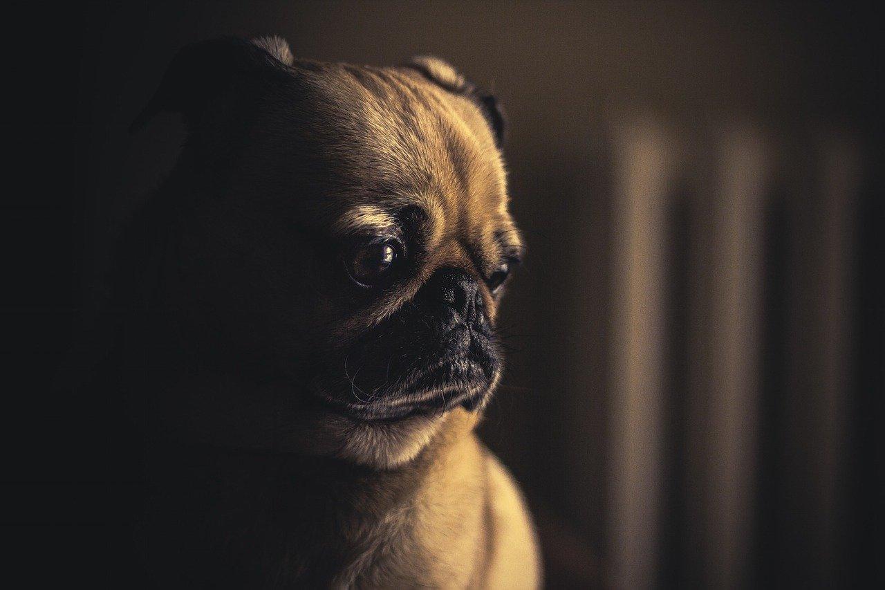 Hogyan előzzük meg a kutya daganatos betegségeit?