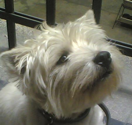 Kutya a játszótéren - friss szemmel a környezettudatos nevelésről
