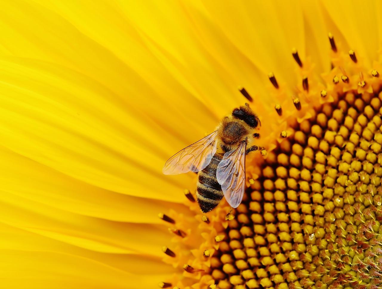 A természet egyik csodája: a méhek tánca